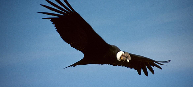 Vogel kan 5 uuur vliegen zonder te bewegen