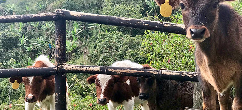 Koeienbossen zorgen voor beter milieu