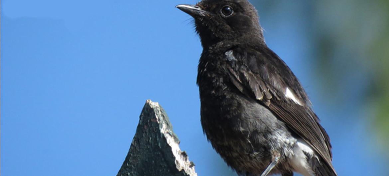 Zingende vogels staan in de Engelse hitlijst