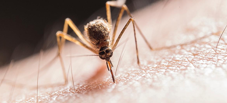 Laserapparaat spoort muggen op