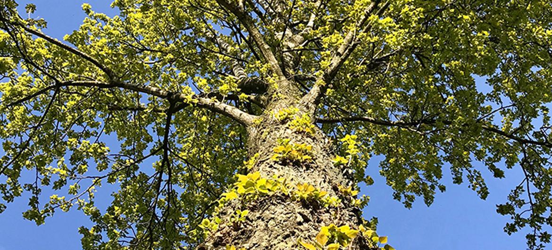 Dorp redt bomen van de kap