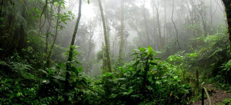 Planten eten olievervuiling Amazone op
