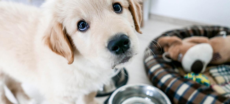 Trouwe hondenogen