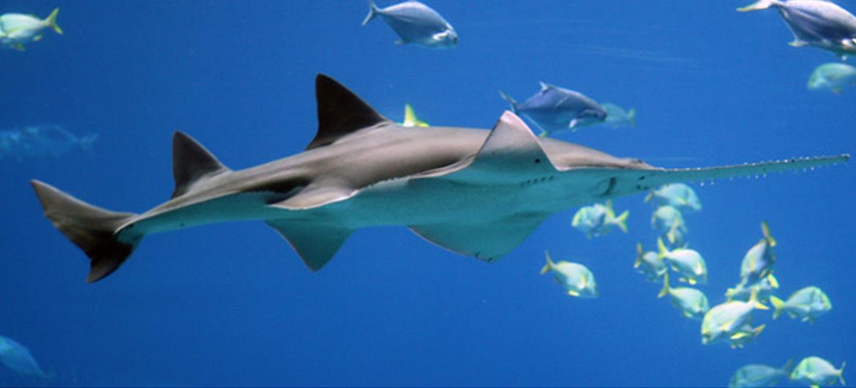 Indiase vissers en koks leren over belang haaien