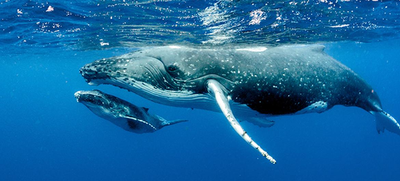 Walvispoep voor een beter klimaat