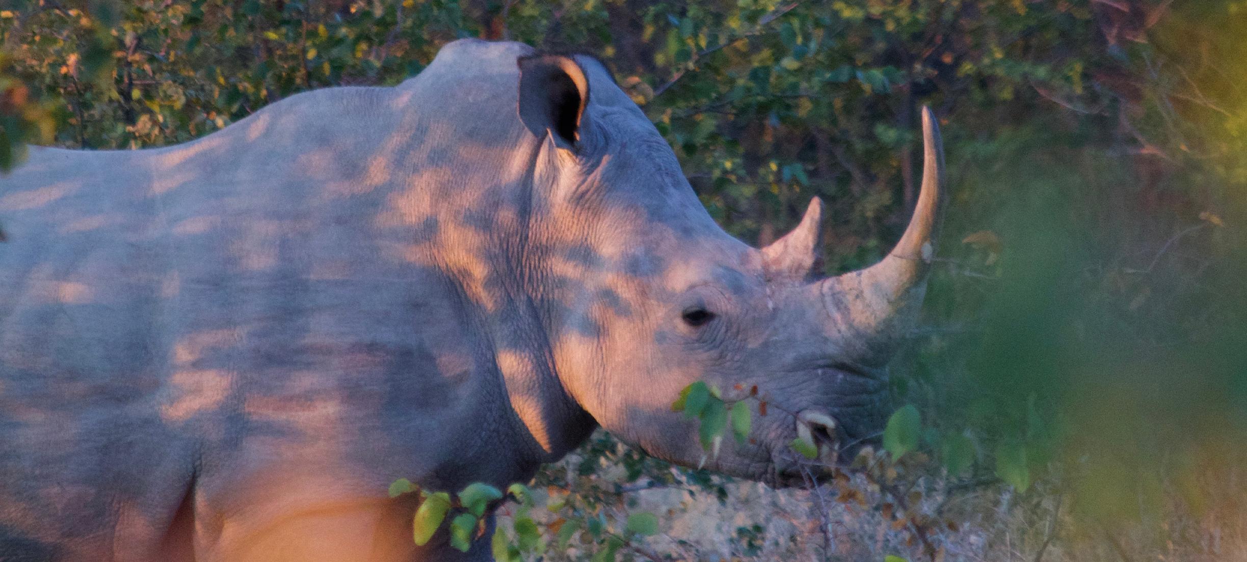 De dag in vooruitgang: Afname gestroopte neushoorns – en meer nieuws