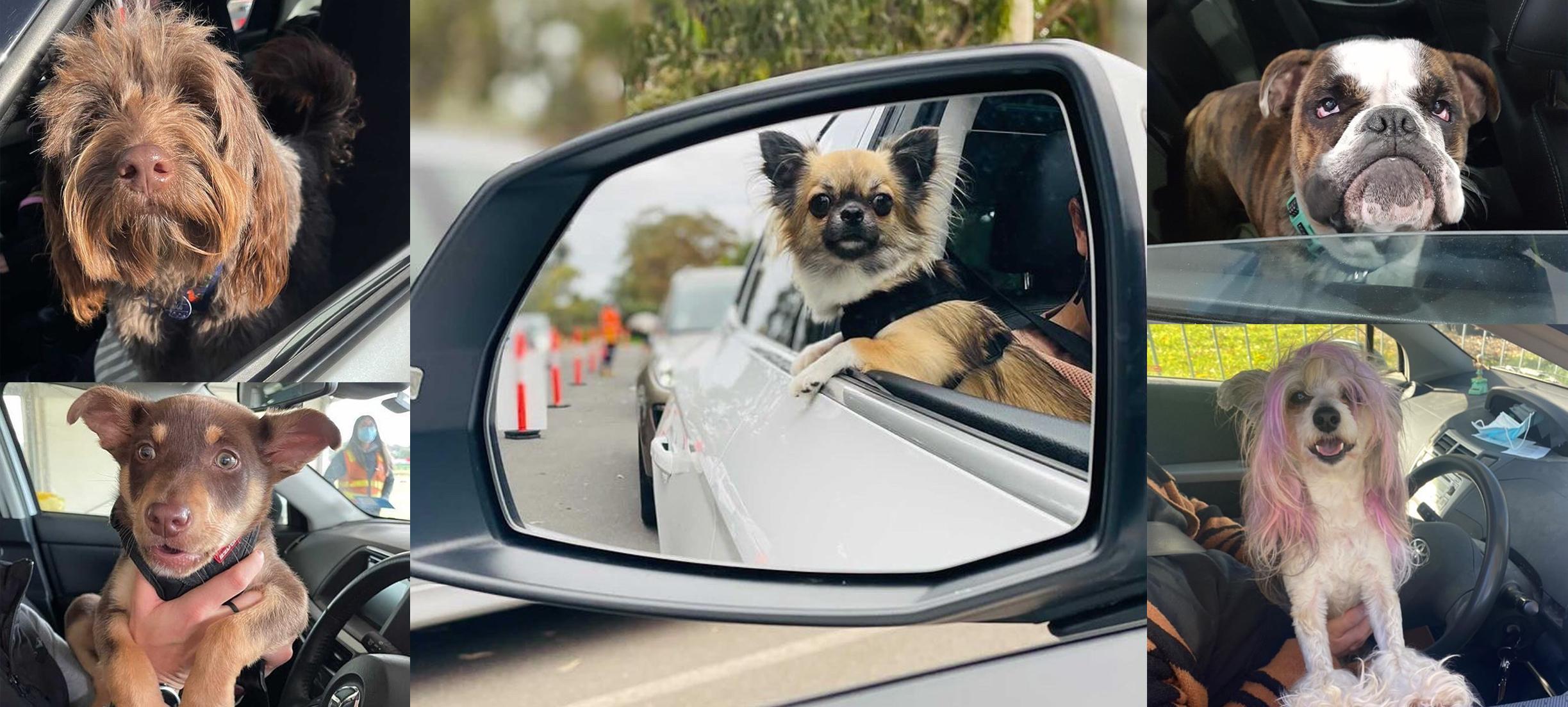 'Swab dogs' vrolijken teststraat Melbourne op, en meer nieuws